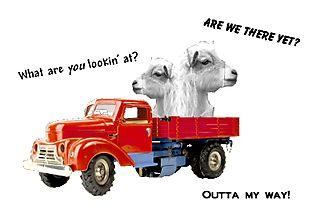 Goatstruck Standard e-mail view