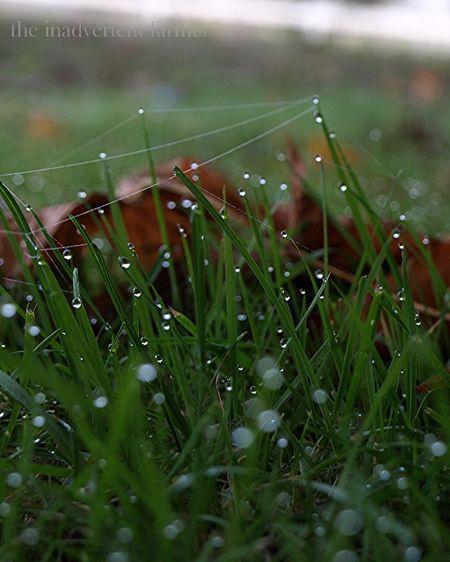 Grassdew