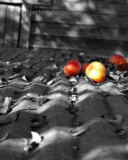 Appleroof