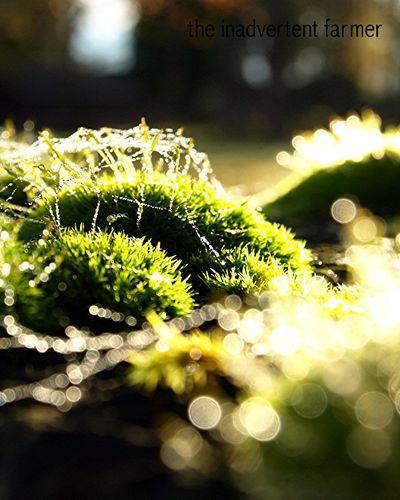 Moss2