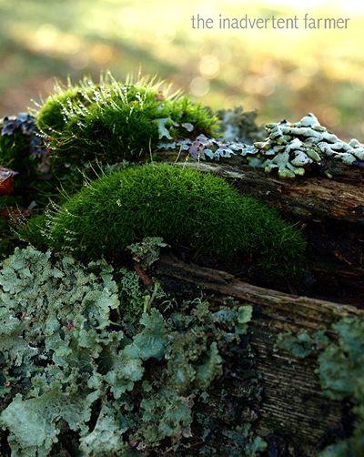 Moss4