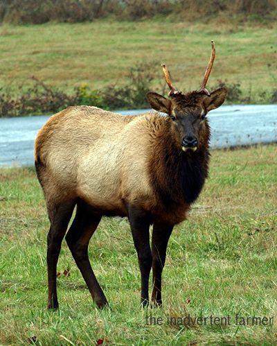 Elk10
