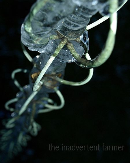Ice chain3