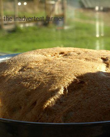 Bread24