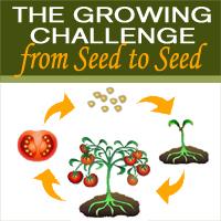 Seed2seed_challenge_200x