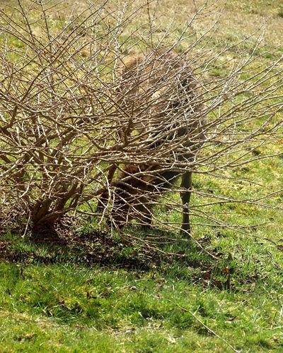 Elk weed8
