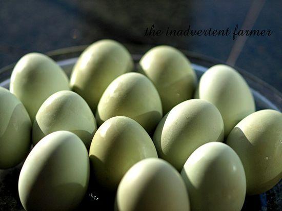 Green eggs2