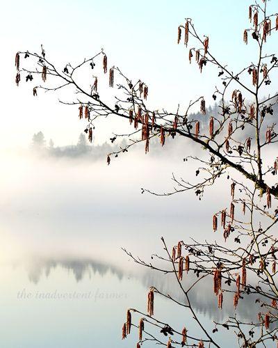 Lake tree2