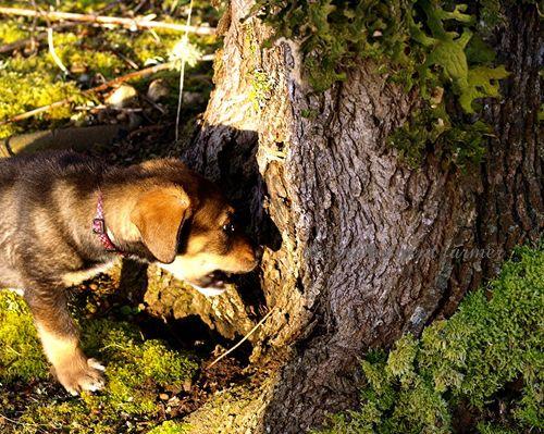 Puppy chew tree