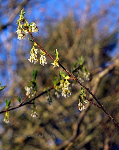 Lake tree bloom3
