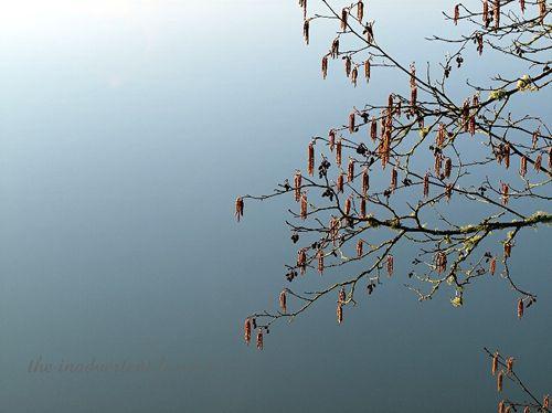 Lake tree1