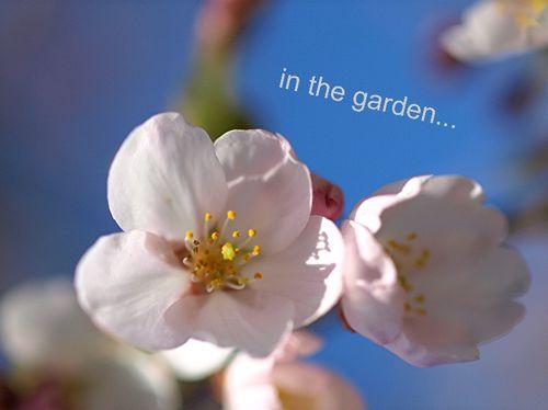 In the garden2