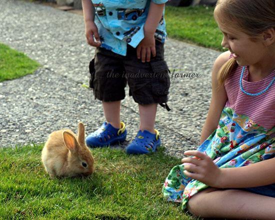 Beach bunny5