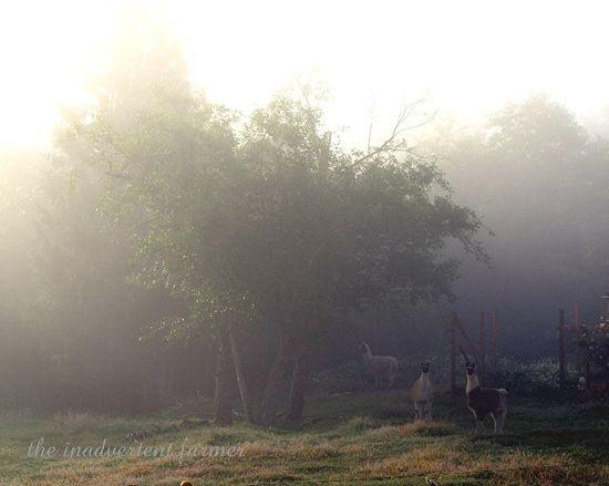 Llama mist