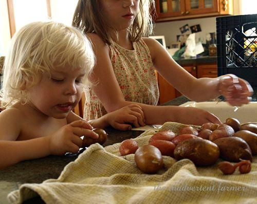 Potato11