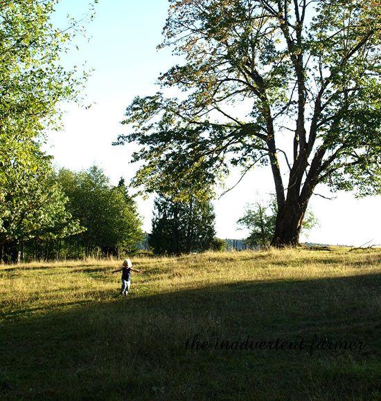 Open field2