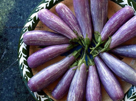 Eggplant plate1