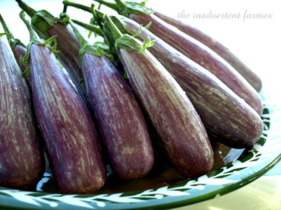Eggplant plate2