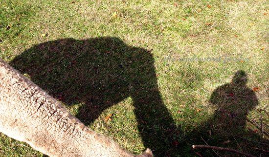 Perspective camel shadow farm camera brush