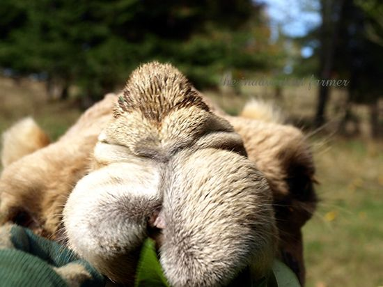 Camel mouth lips farm brush feed