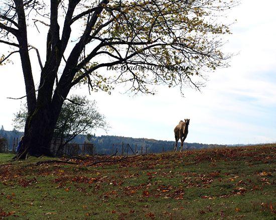 Camel tree fallen leaves autumn girl hiding brush