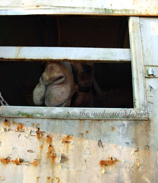 Gizmo trailor prison jail sad