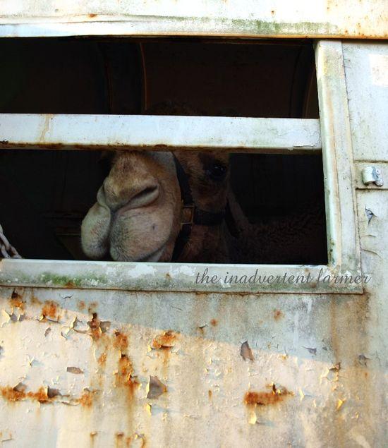 Gizmo trailor prison jail sad