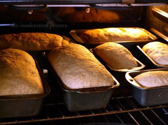 Organic whole wheat bread oven homemade fresh hot