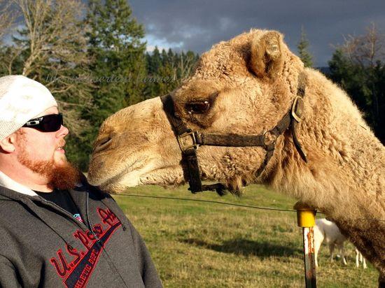 Camel lips nose smell glasses hat
