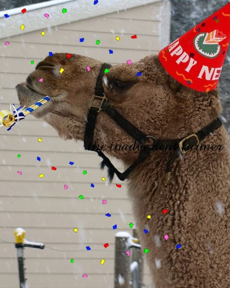New years camel hat party