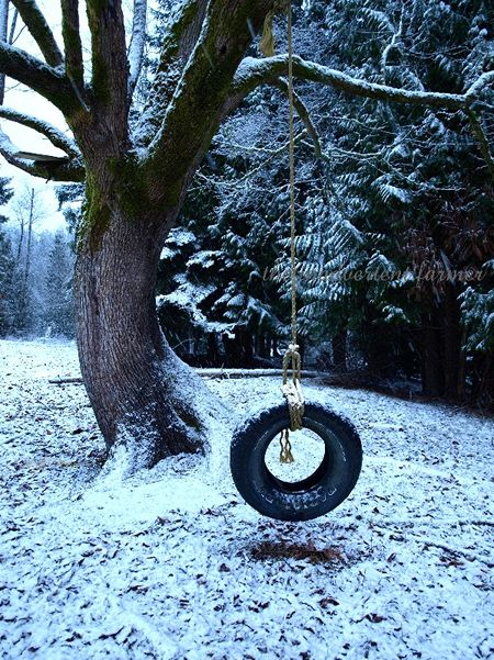 Tire swing snow winter maple tree farm