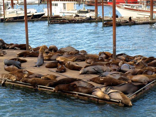 Sealions dock astoria oregon