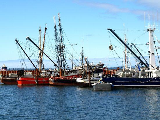 Fishing fleet astoria oregon harbor