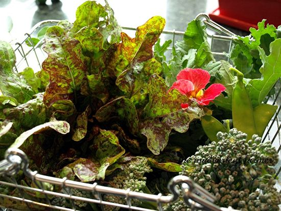 Lunch salad1