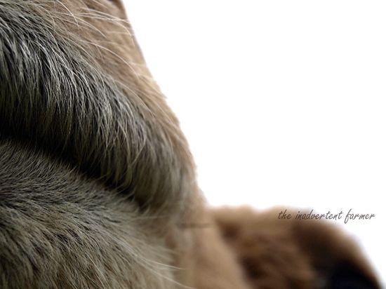 Llama camel lips whiskers wool