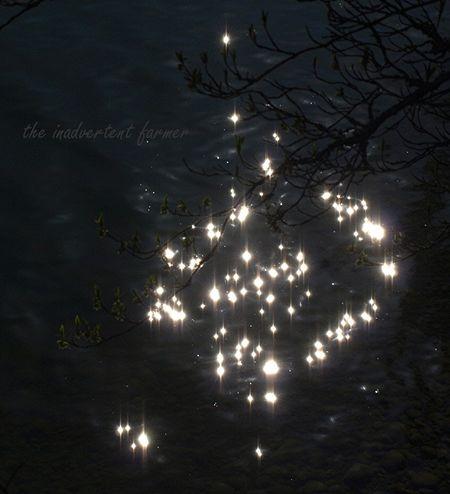 Stars on the water lake sun