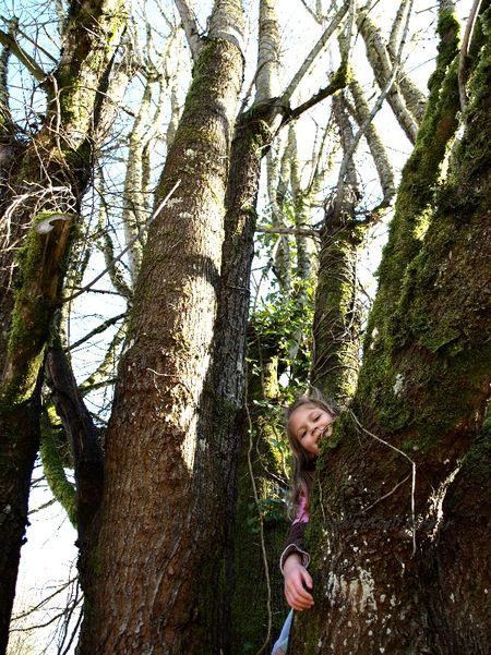 Girl climb tree peek