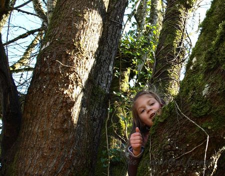 Girl climb tree thumbs up