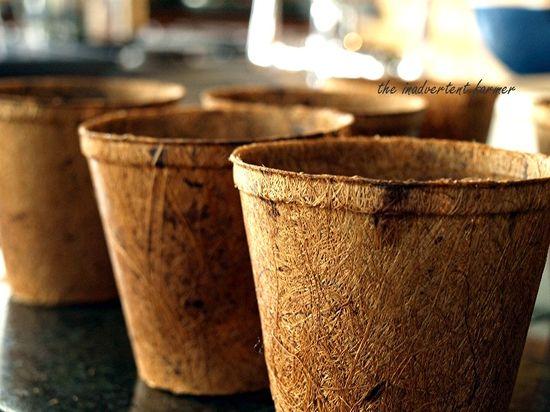 Seedlings coir pots