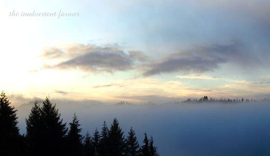 Mist fog trees morning sunrise valley
