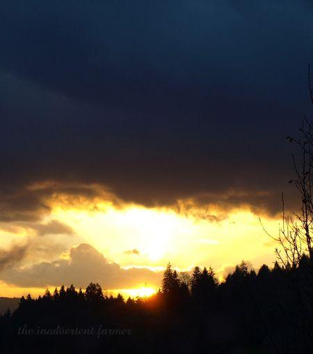 Sundown trees valley clouds winter