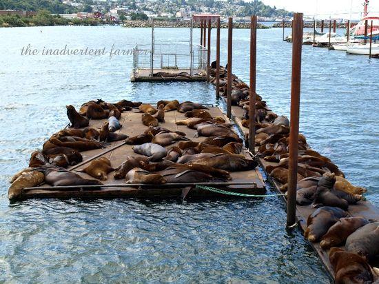 Sea lions dock astoria
