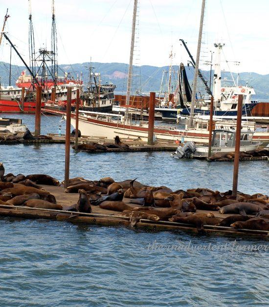 Sea lions astoria fishing fleet dock