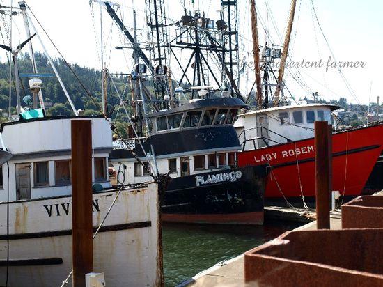 Ships fishing fleet harbor astoria oregon pacific