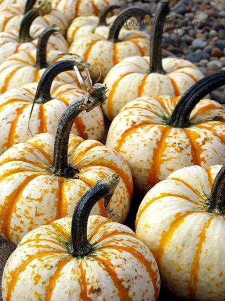 Pumpkin line5