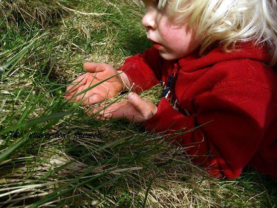 Wooly bear boy grass caterpillar