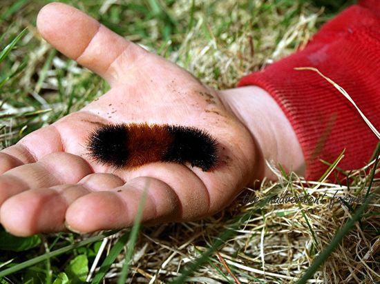 Wooly caterpillar hand boy toddler