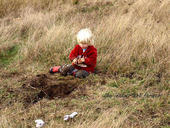 Mud hay field2