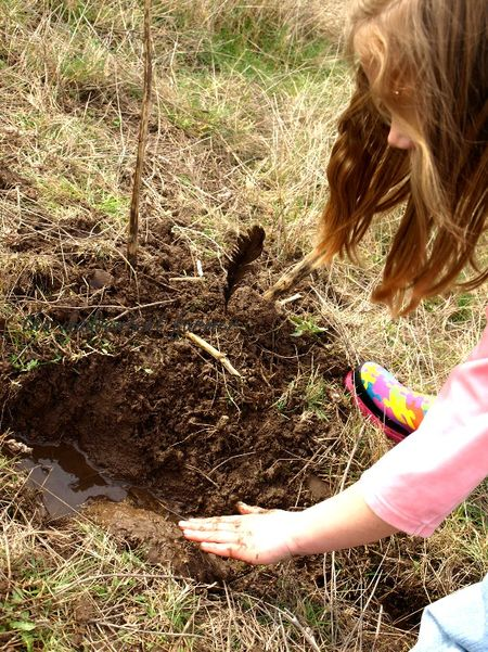 Mud hay field6