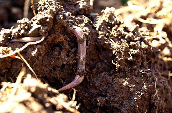 Garden update worm